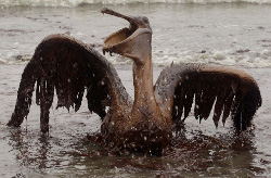 Gulf oil spill: the aftermath